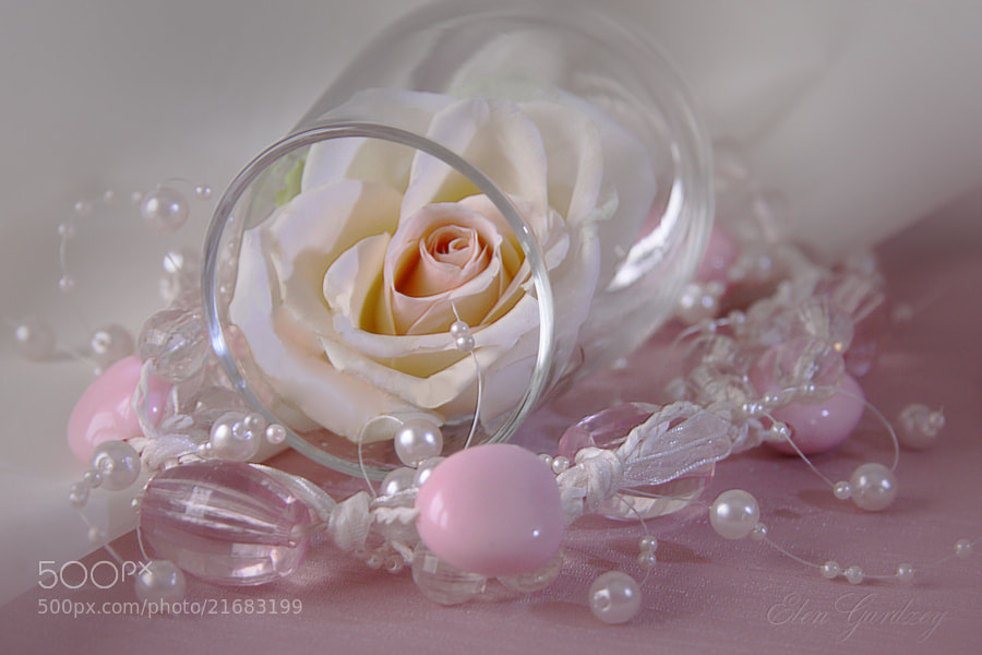 Photograph Rose for a loved... by Elen Gardzey on 500px