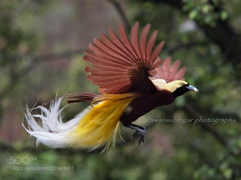 Photograph in flight by Irawan Subingar on 500px