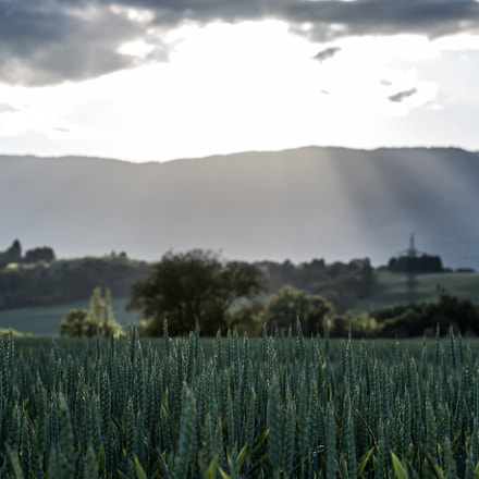 Fields of Geneva