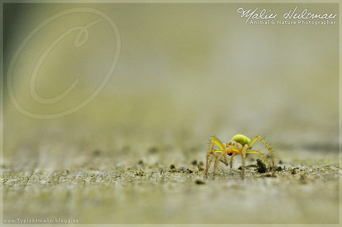Photograph Spider (2) by Malin Hultman on 500px
