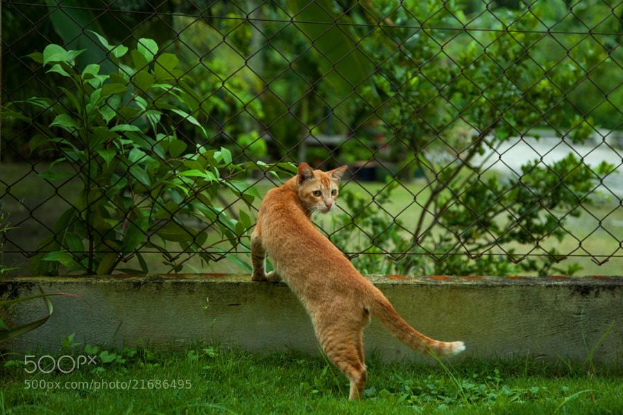 Cat by Nazrin Shah (NazrinShah)) on 500px.com