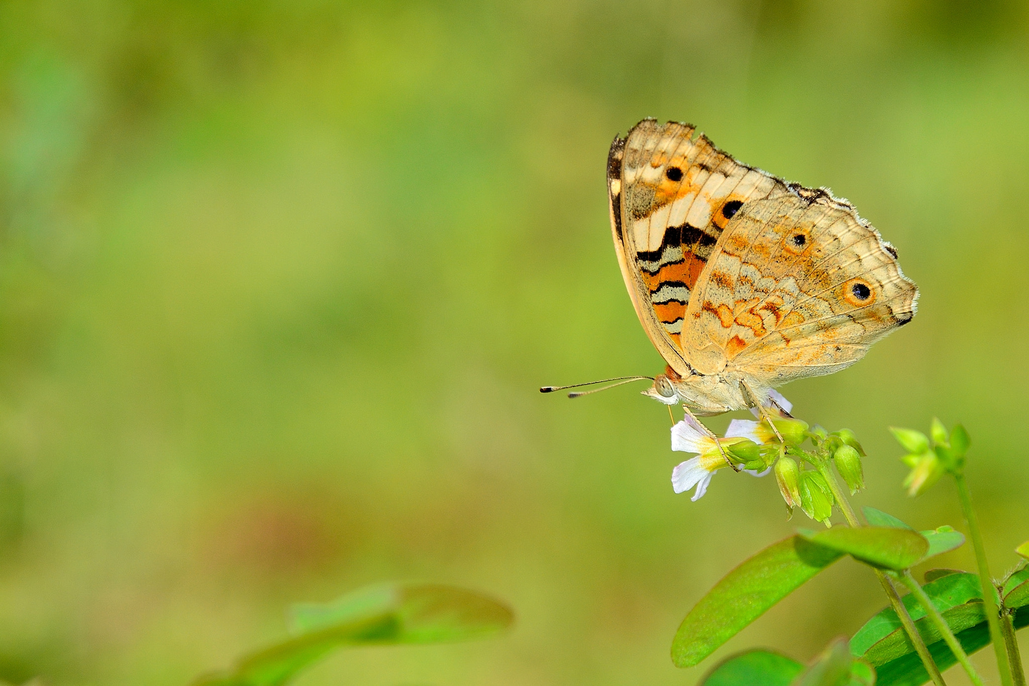 Photograph a butterfly by RARYW Photographic on 500px