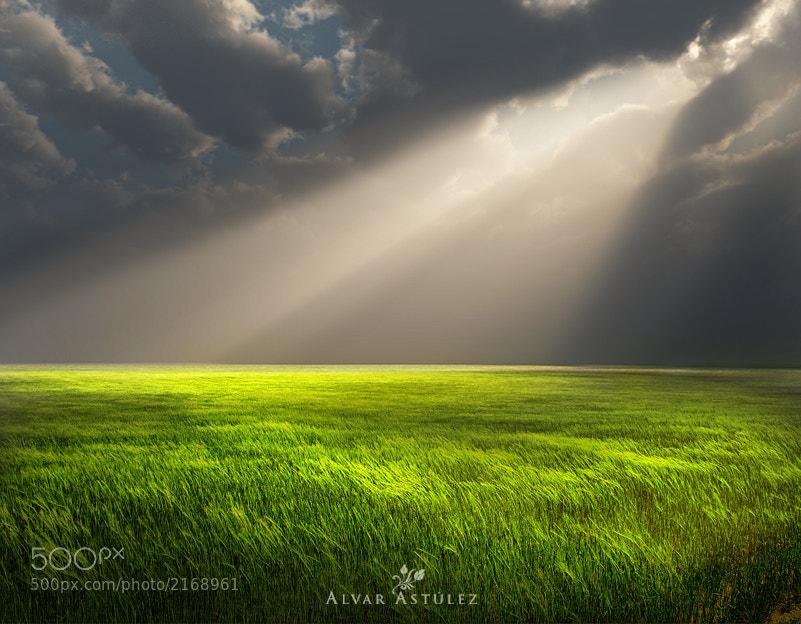 Photograph Green spring by Alvar Astúlez on 500px