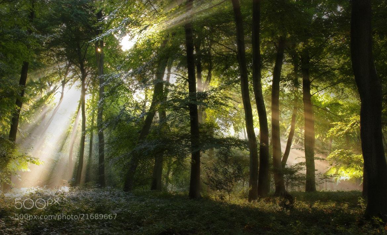 Photograph Sun in the Canopy by Ceri Jones on 500px
