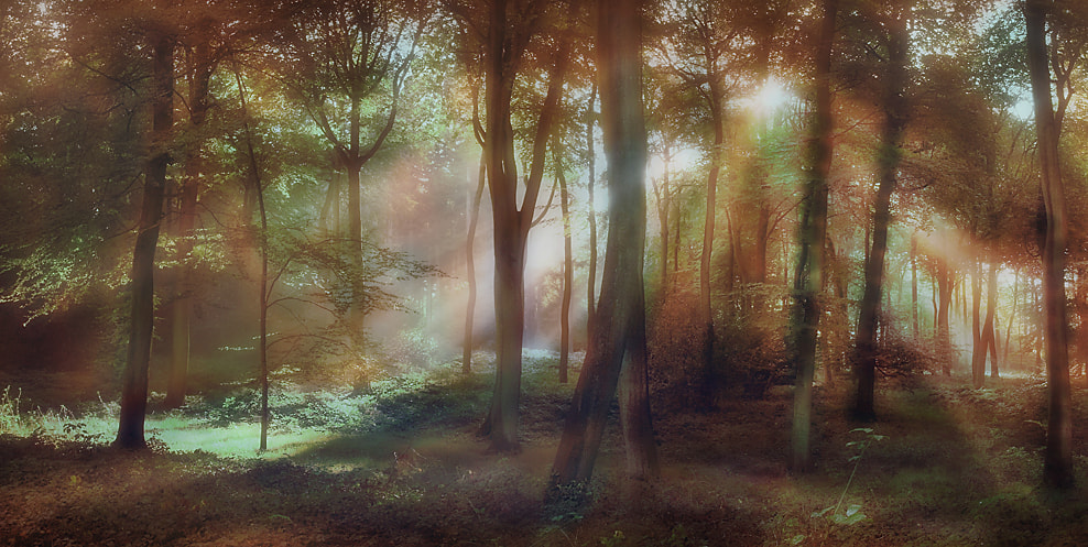Photograph Morning Woodlands by Ceri Jones on 500px