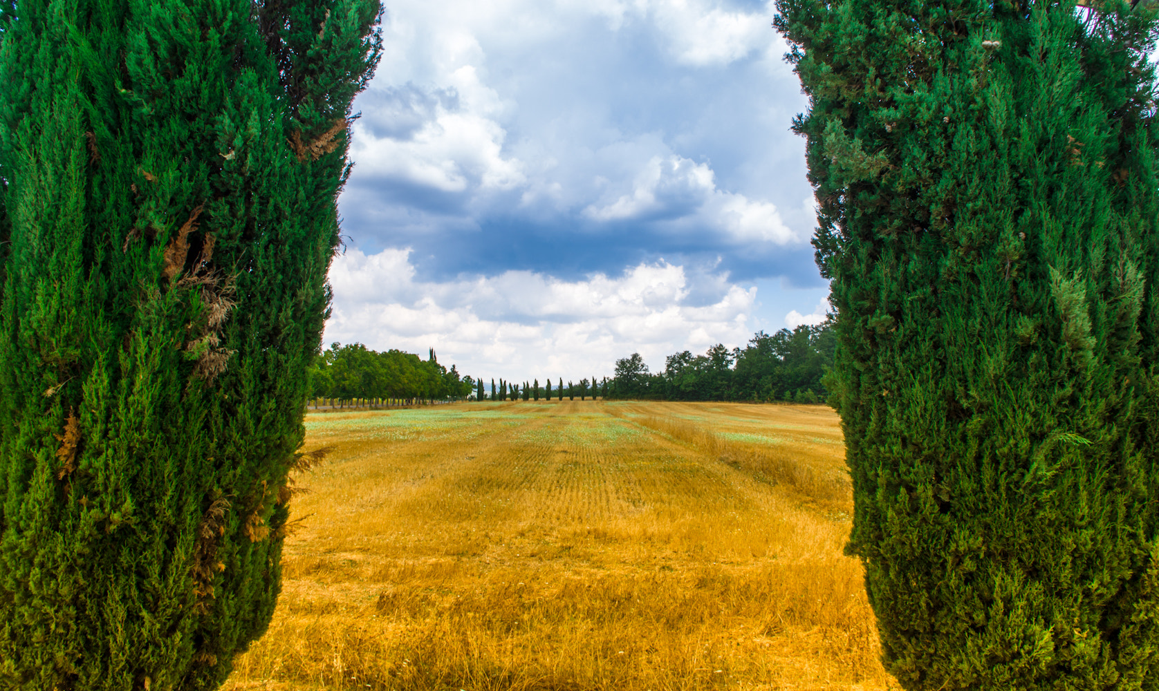 Photograph Cipressi / Cypresses by Federico Tomasello on 500px