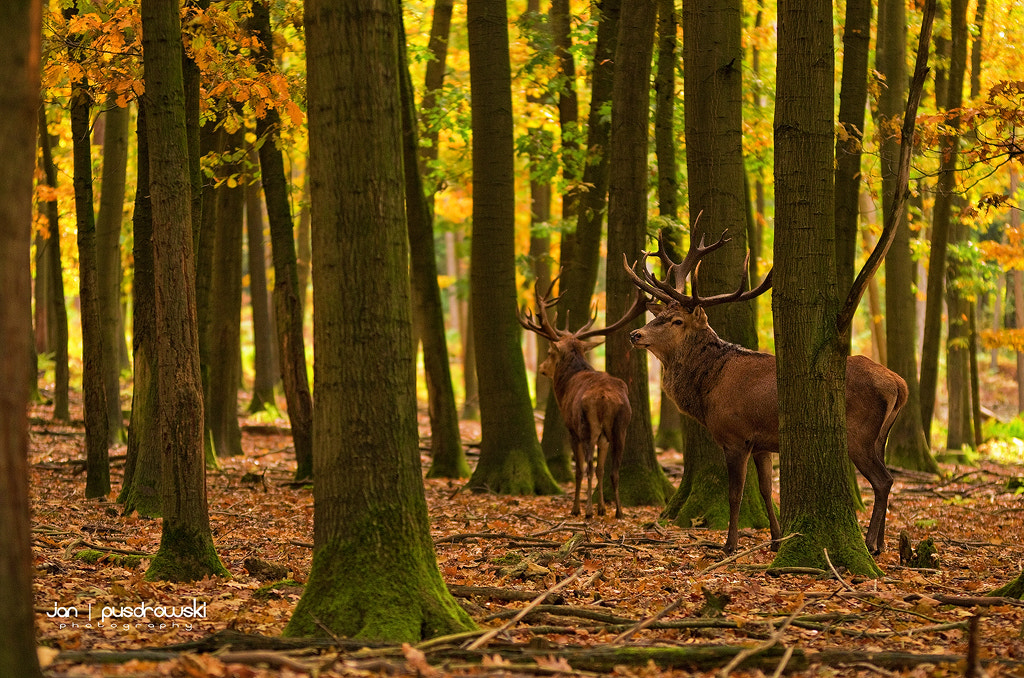 Photograph Autumnal Moment by Jan Pusdrowski on 500px