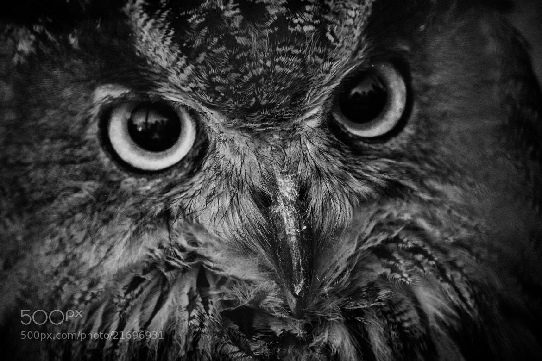 Photograph Intelligence by Antonio Janeski on 500px