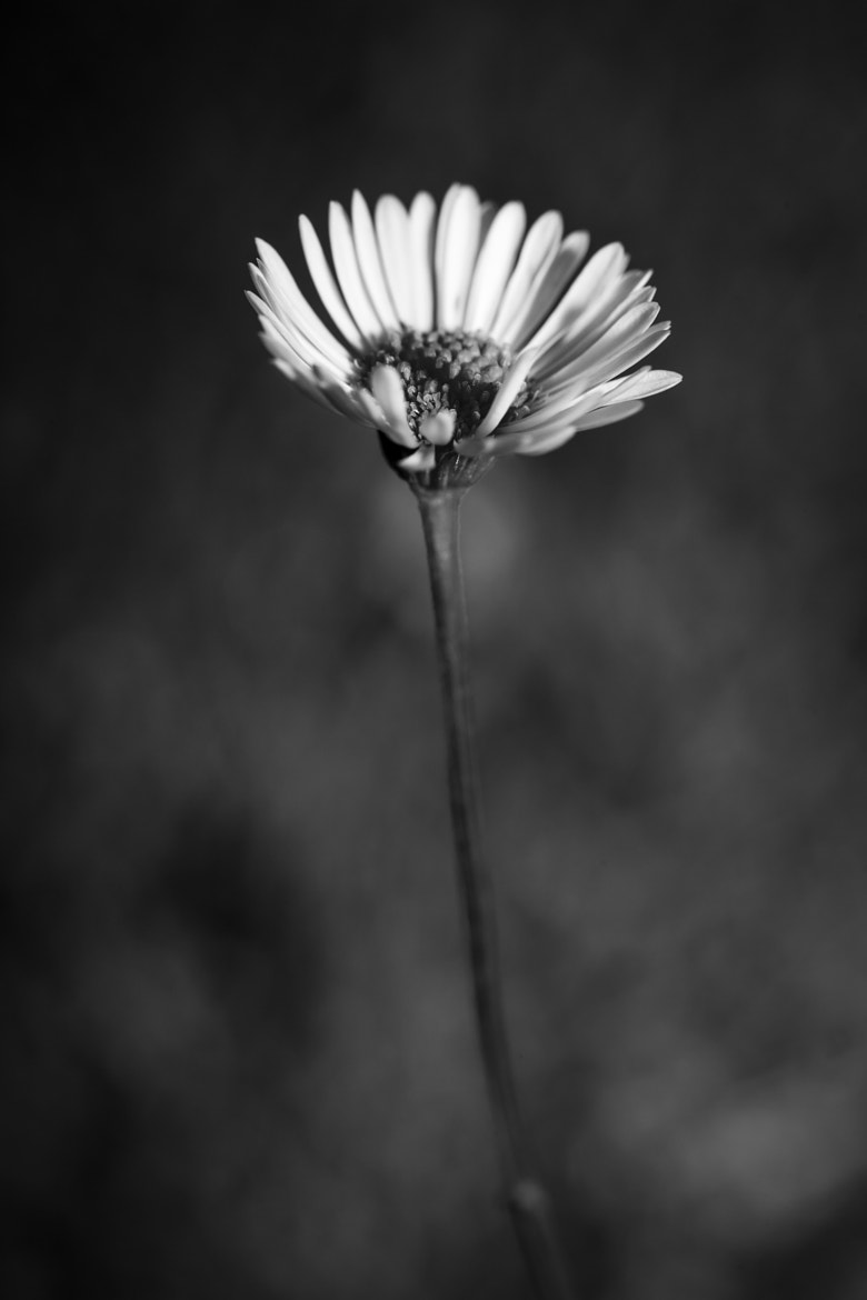 Photograph Dark by Mike Blackburn on 500px