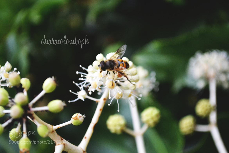 Photograph Bee-autiful World by Chiara Colombo on 500px