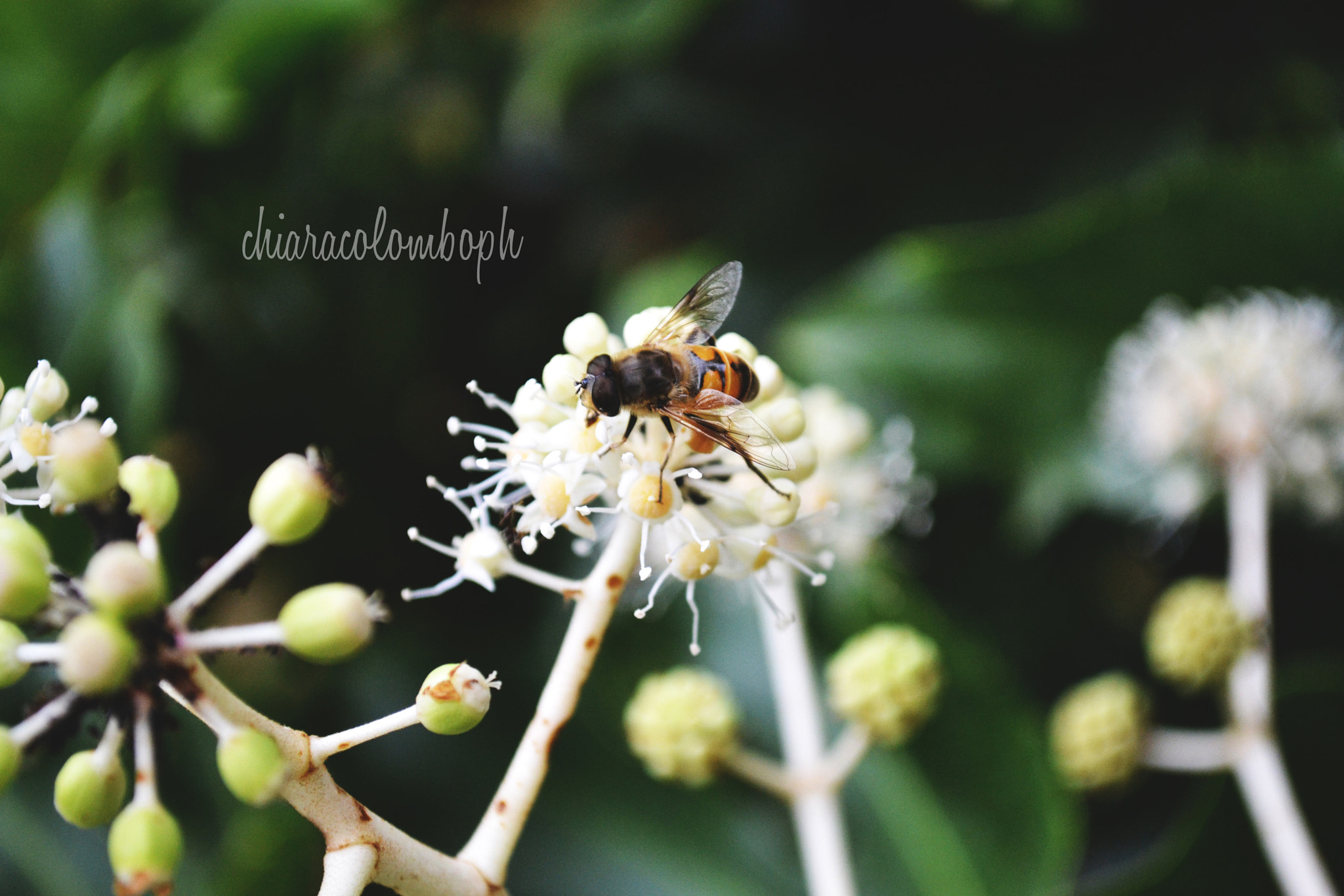 Photograph Bee-autiful World by Chiara Colombo on 500px