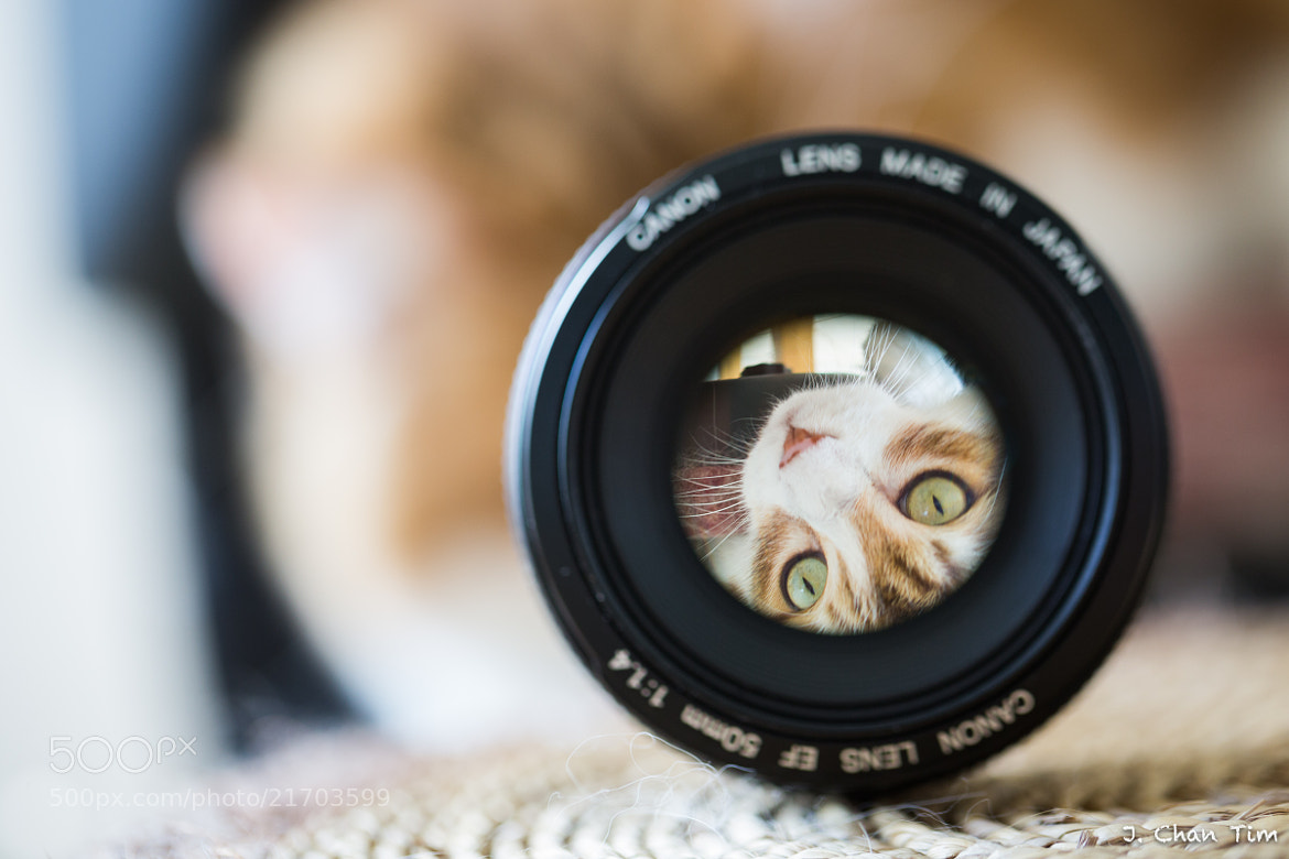 Photograph A cat in my lens by Julien Chan Tim on 500px