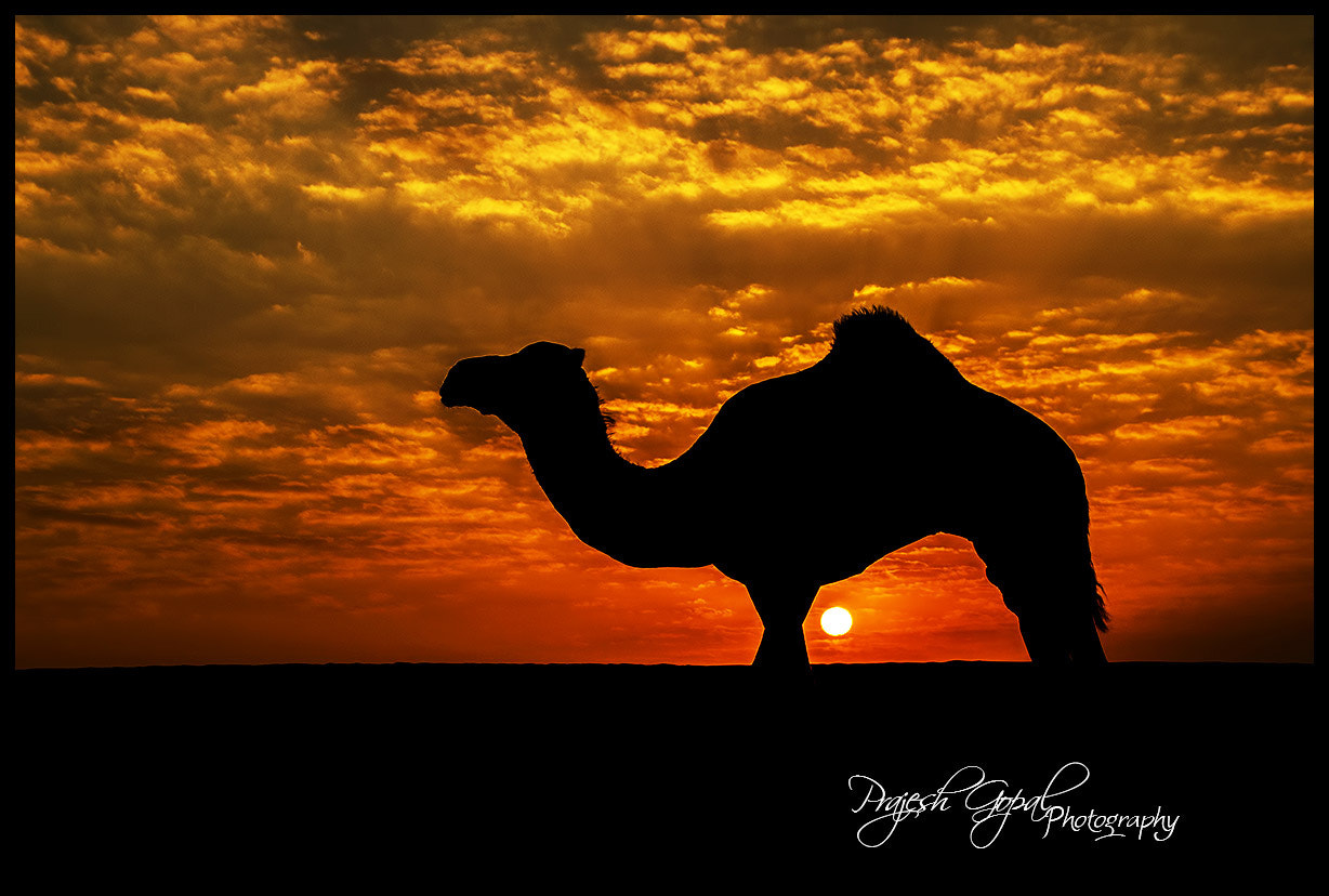 Photograph Silhouette !!! by Prajesh Gopal on 500px