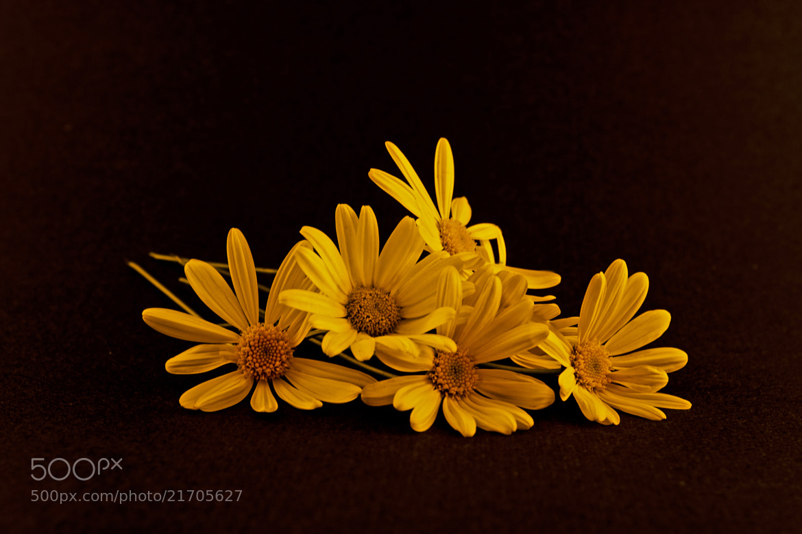 Photograph Bouquet of Yellow Daisies by Mark Hendrickson on 500px