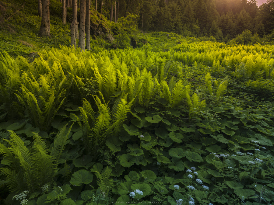 Nature Photo Glade in the alpine part of Austria by nature photographer Maxim K. on 500px.com