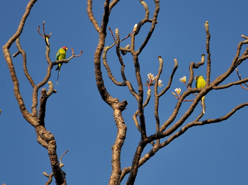 Photograph parakeets by Gokul K on 500px