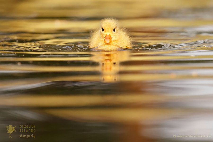Mellow Yellow by Roeselien Raimond