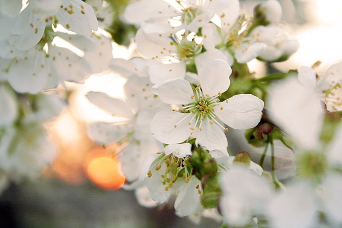 Photograph Cherry by Ezy Summmers on 500px