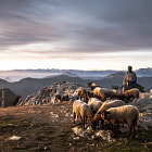 Постер, плакат: sheep in the mountains