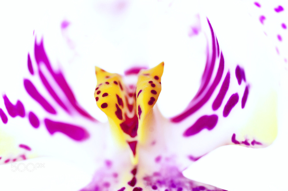 Photograph Orchid meets Macro by Bernd Rottmann on 500px