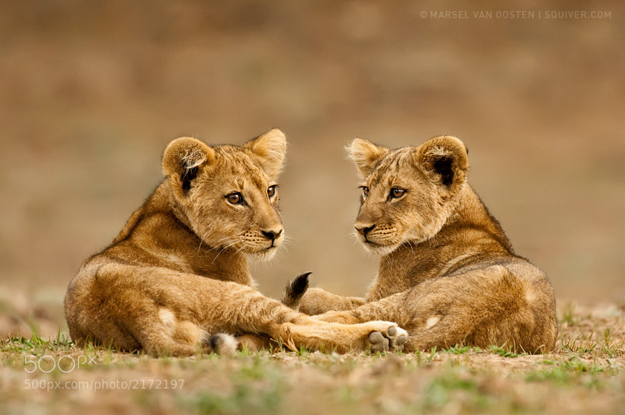 Photograph Twins by Marsel van Oosten on 500px