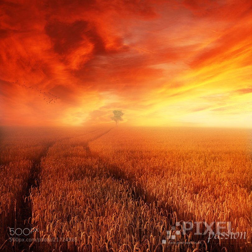 Photograph late summer by Pixel Passion on 500px