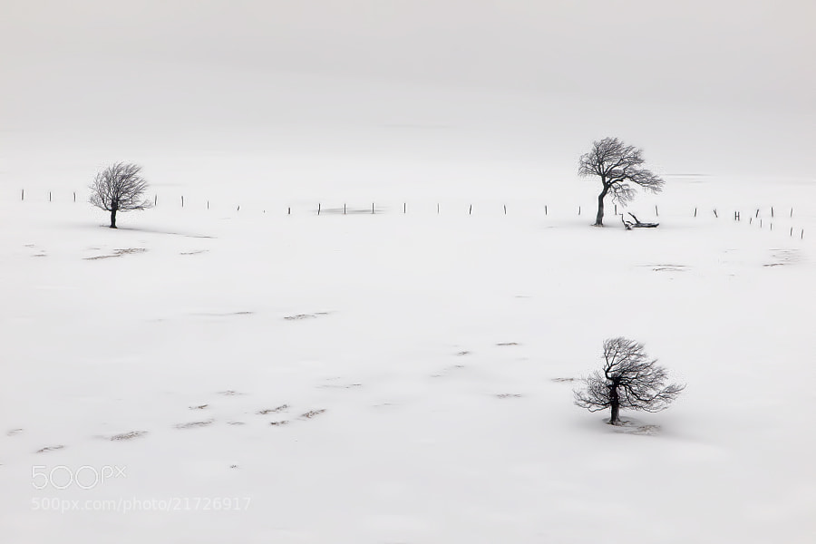 Photograph Three trees by Stéphane ABCDEF on 500px