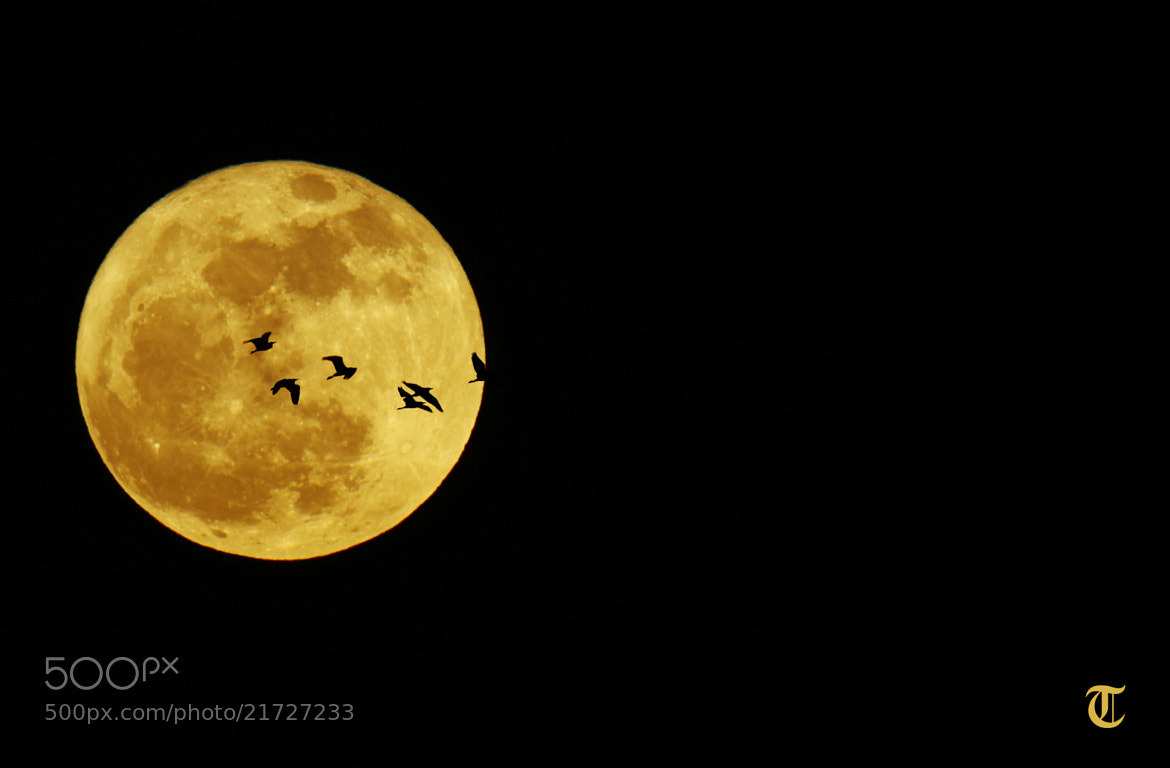 Photograph the Last full moon for 2012 withe a 800 mm Lens by TAJANI ABDELOUAHED on 500px