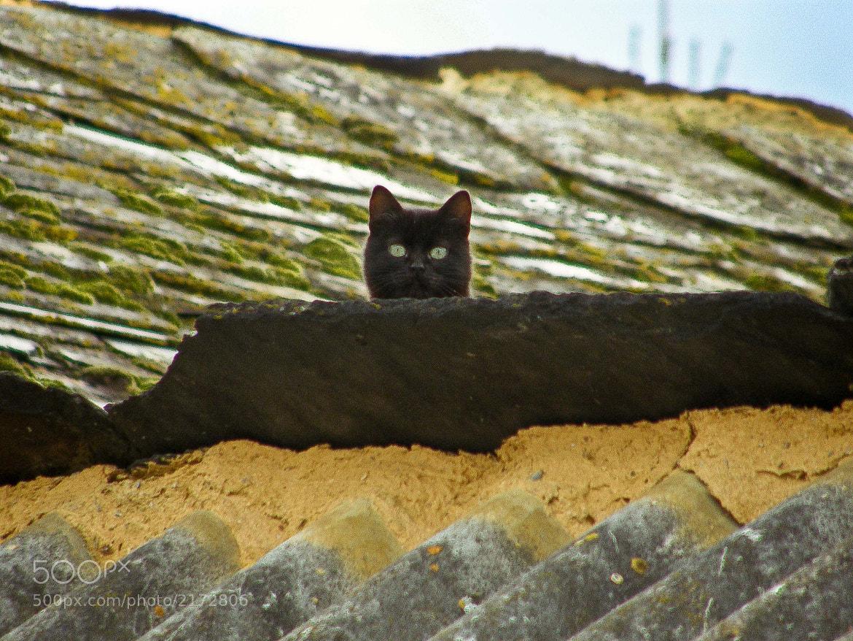 Photograph Spy cat by miguel gonzález on 500px
