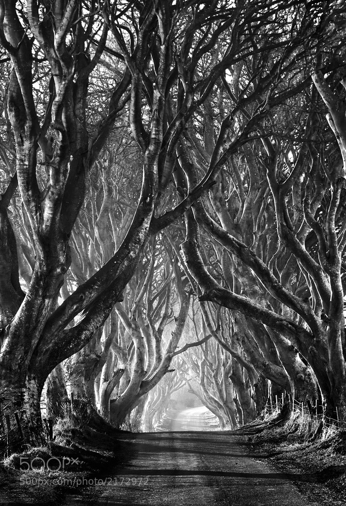 Photograph The Dark Hedges by Stephen Emerson on 500px