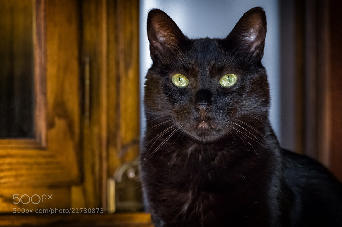 Photograph Eyes by Lori Coleman on 500px