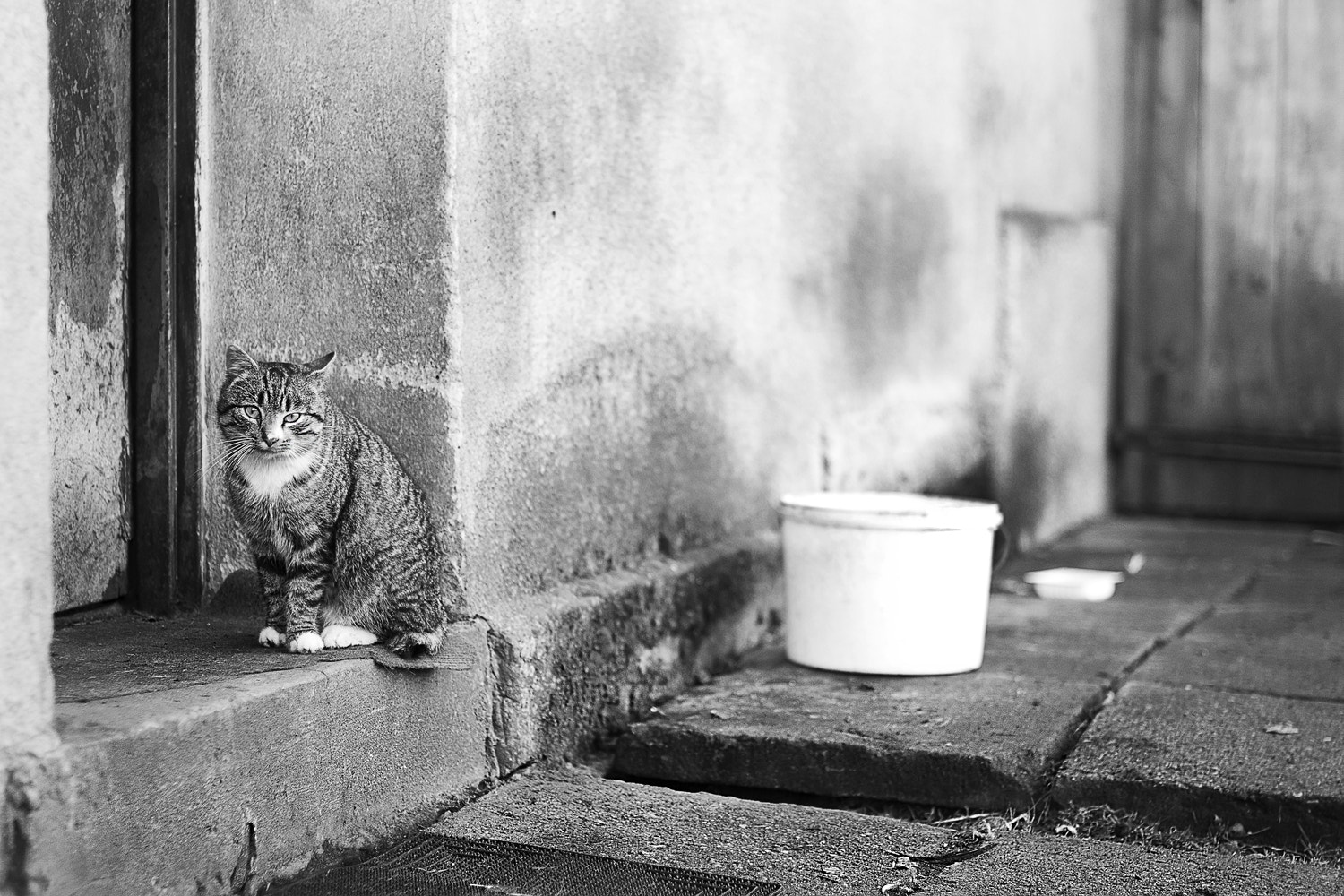 Photograph cat's life by Agnieszka Szydlowska on 500px