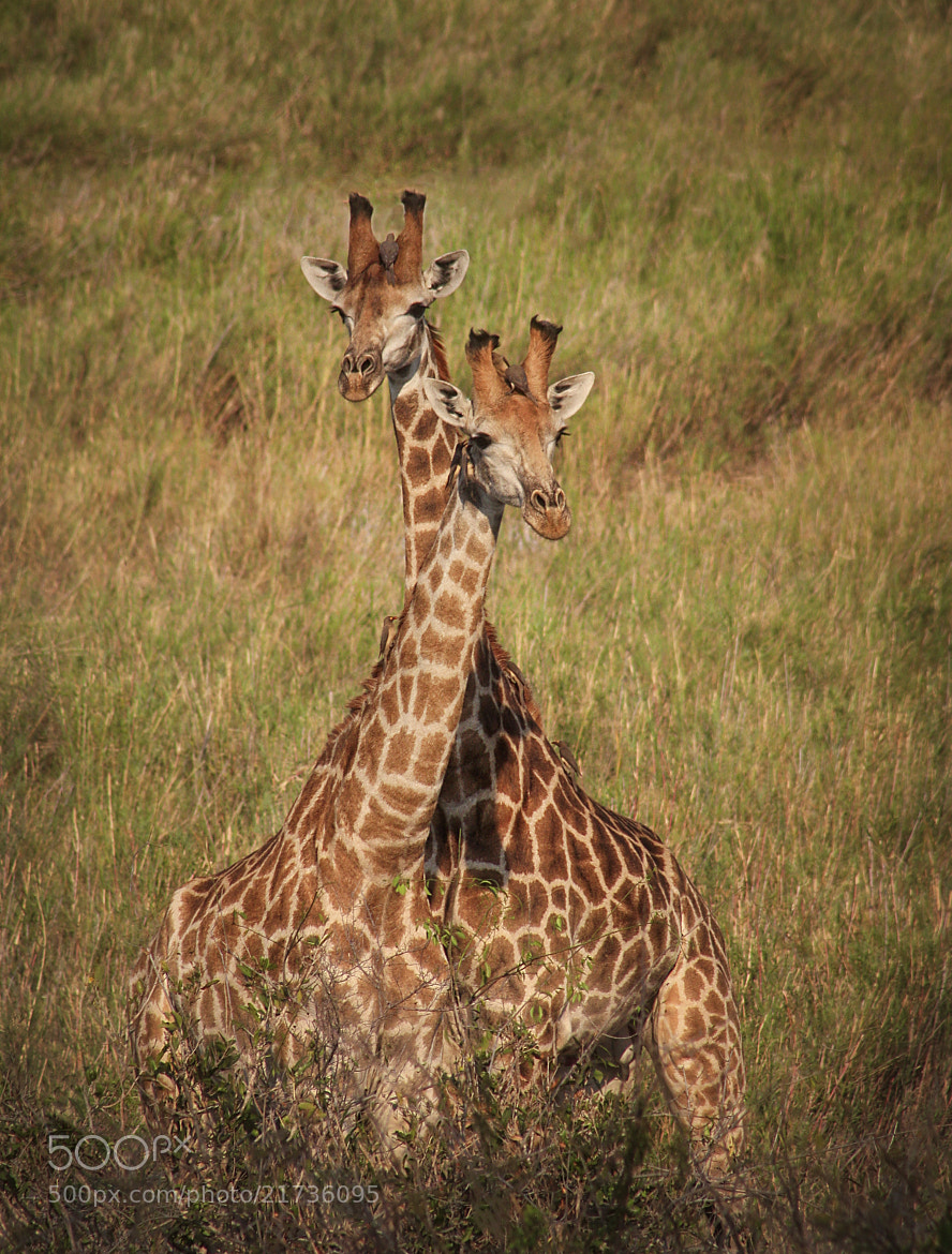 Photograph Togetherness by Kim Andelkovic on 500px