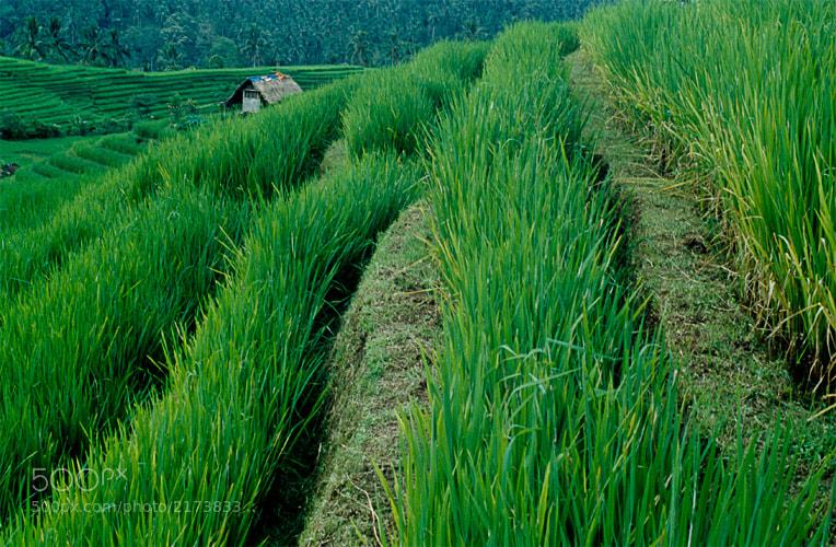 Photograph Terrazas de arroz by Markus Schroll on 500px