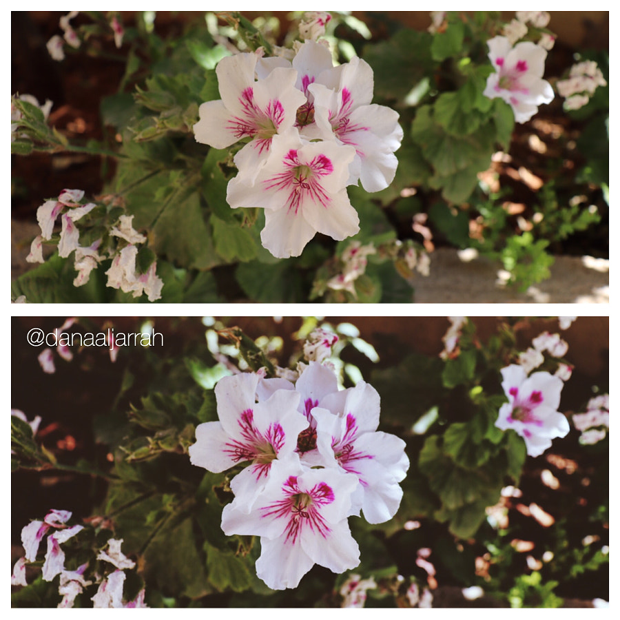 Before and after editing by Dana Aljarrah on 500px.com