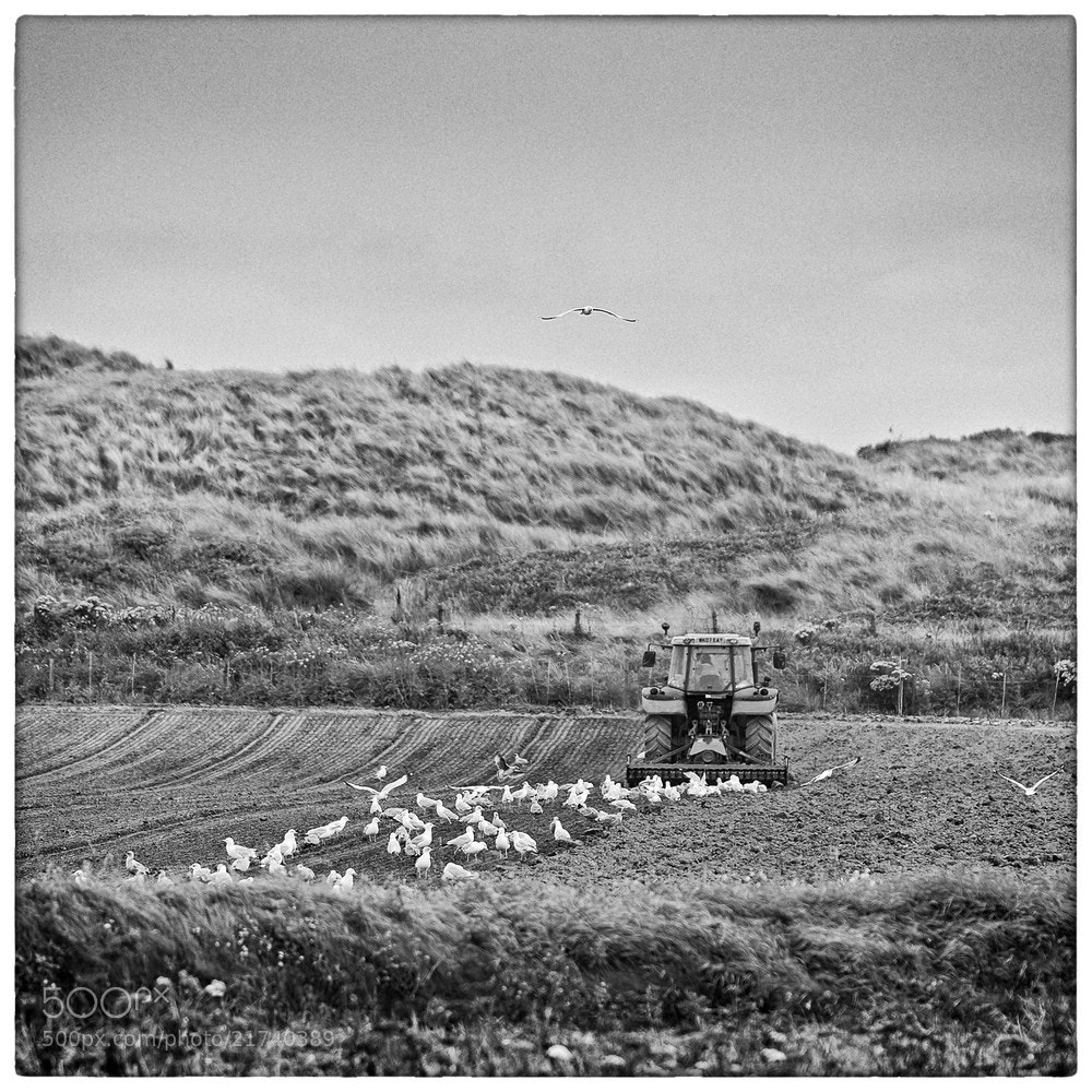 Photograph feathered farm hand by Juergen B. Mueller on 500px