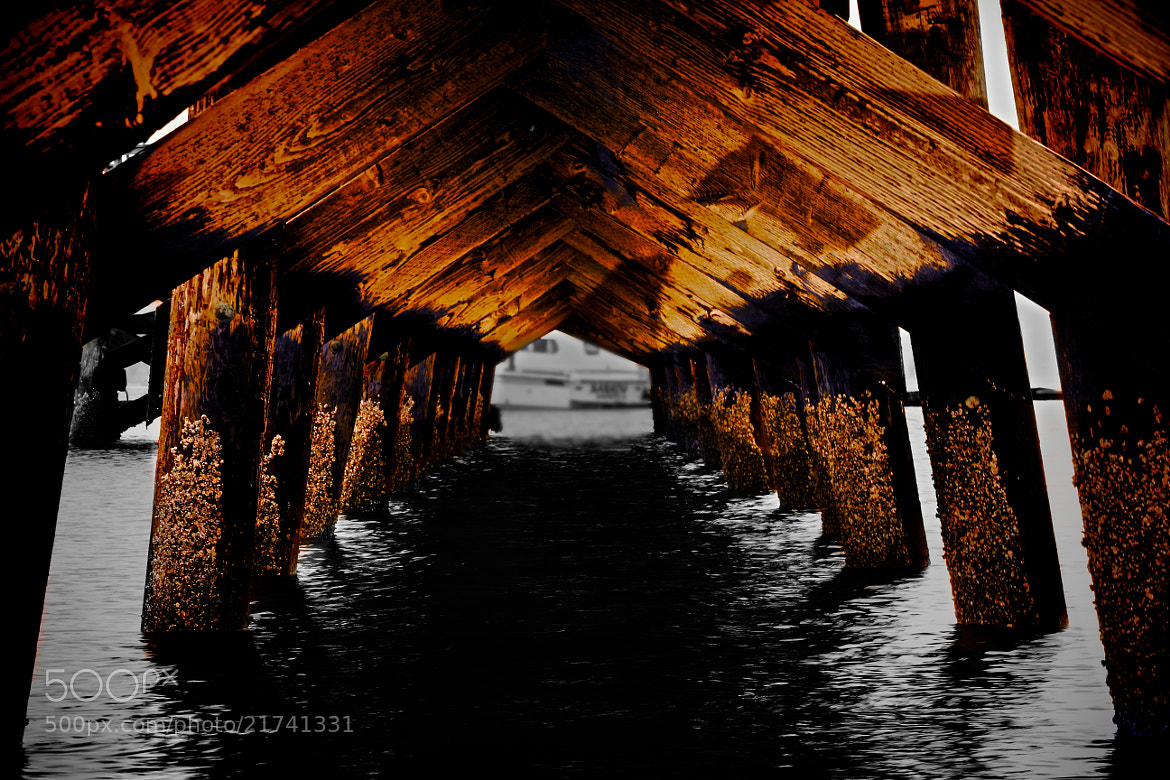 Photograph Under the Dock by Alex Hickey on 500px