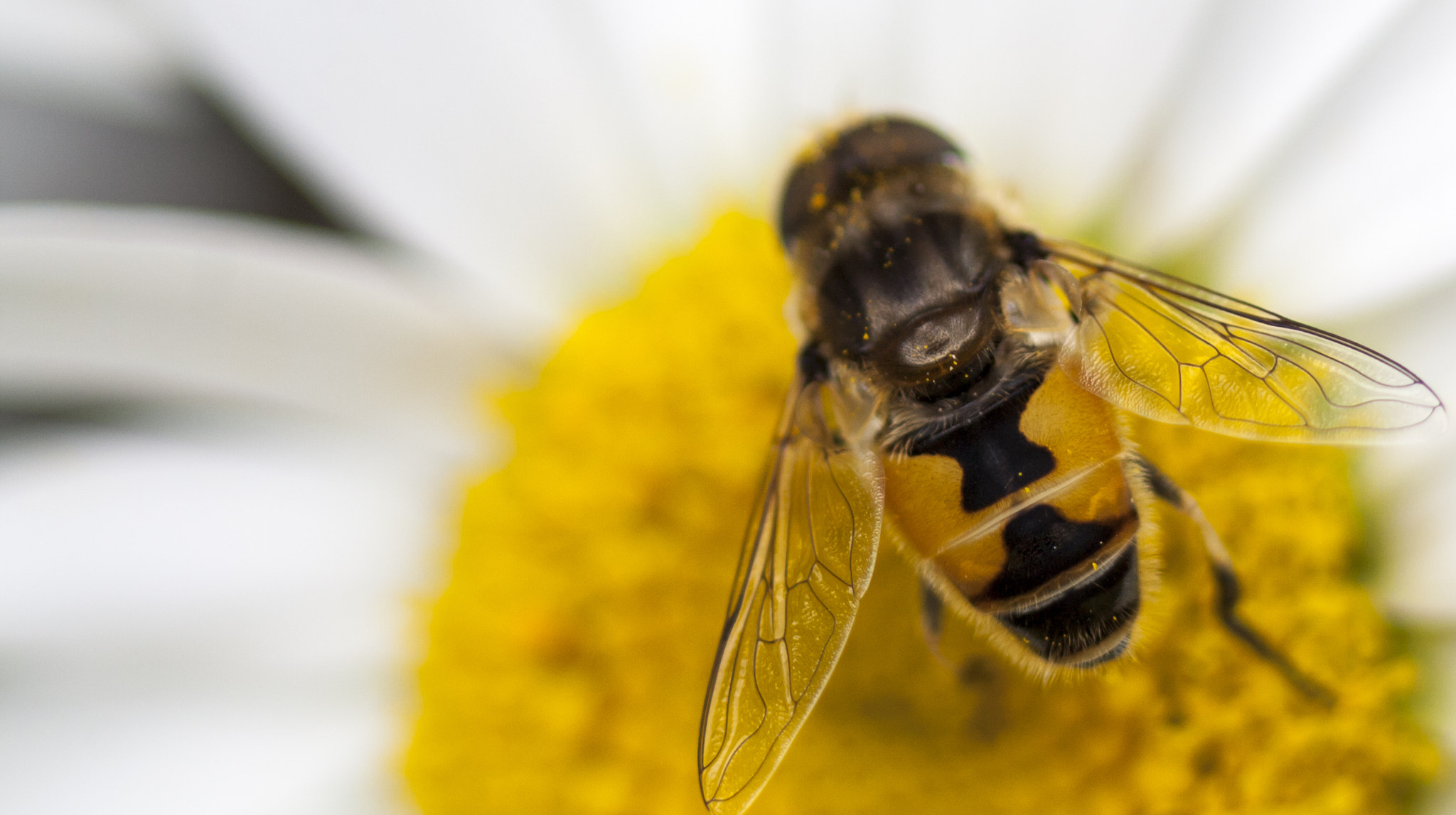 Photograph Hoverfly by Julie Jamieson on 500px