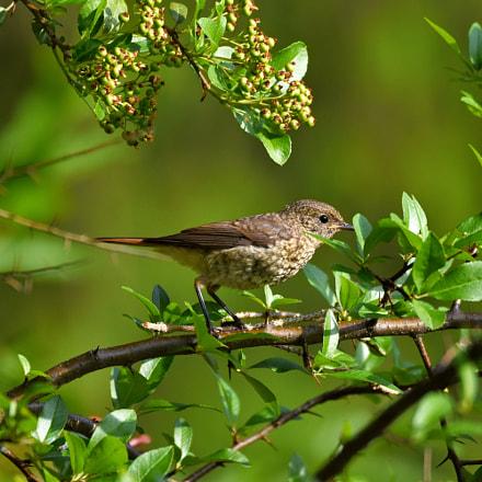 Ptáček :-)