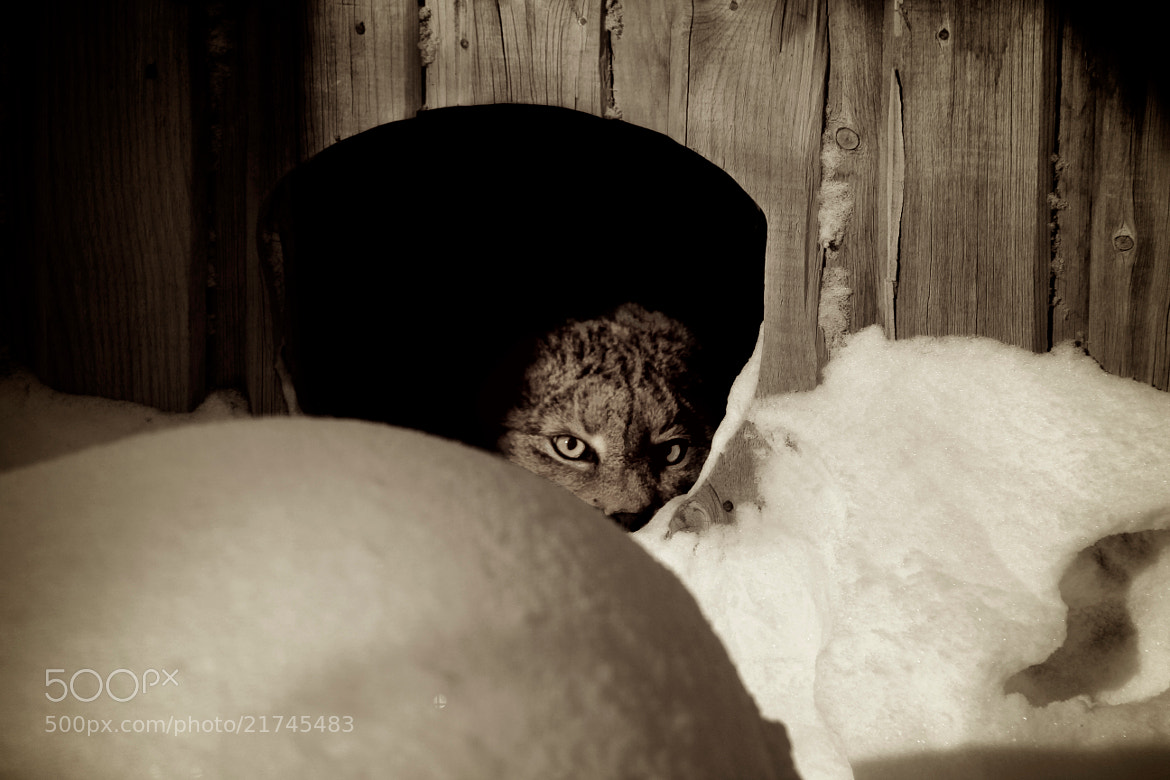 Photograph Hello Kitty! by Sam  on 500px