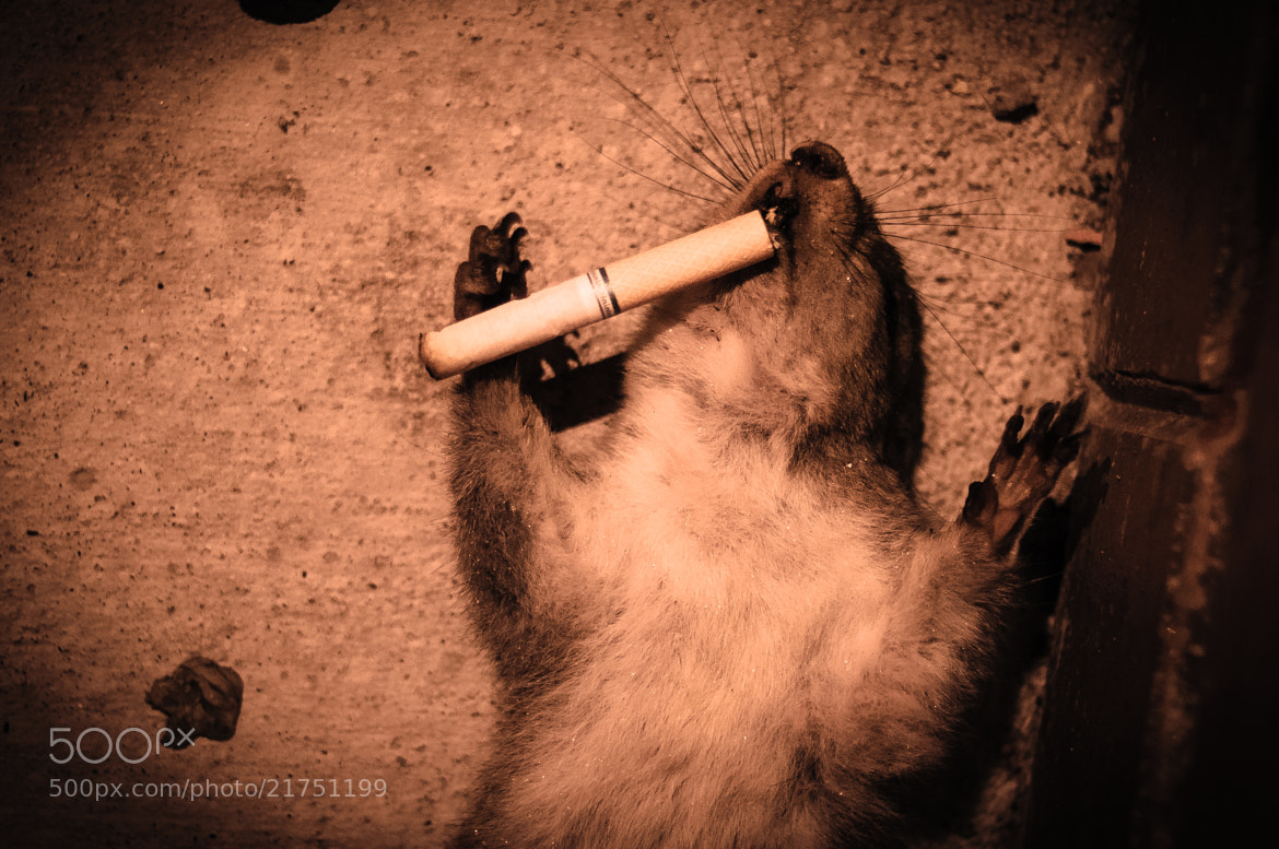Photograph Smoking Kills by Thomas Stromberg on 500px