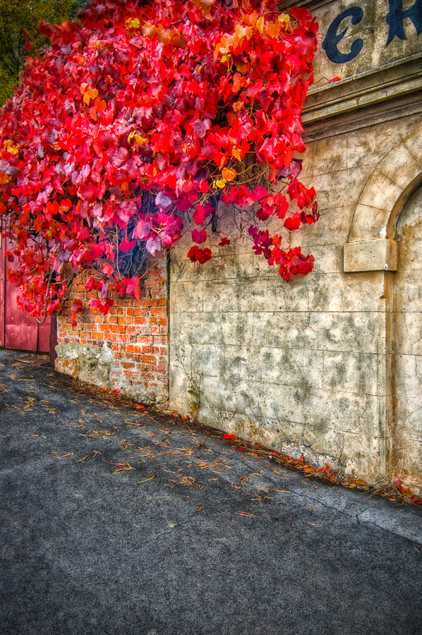 Photograph Wall by tschnaider on 500px