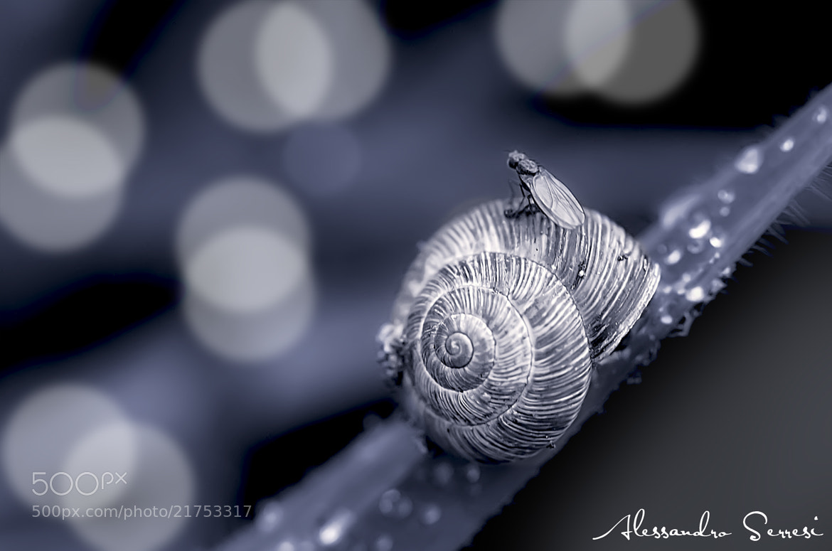 Photograph SNAIL WITH HOST by Alessandro Serresi on 500px