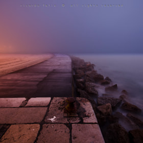 A foggy morning #4 by Ricardo Bahuto Felix (bahutofotografia)) on 500px.com