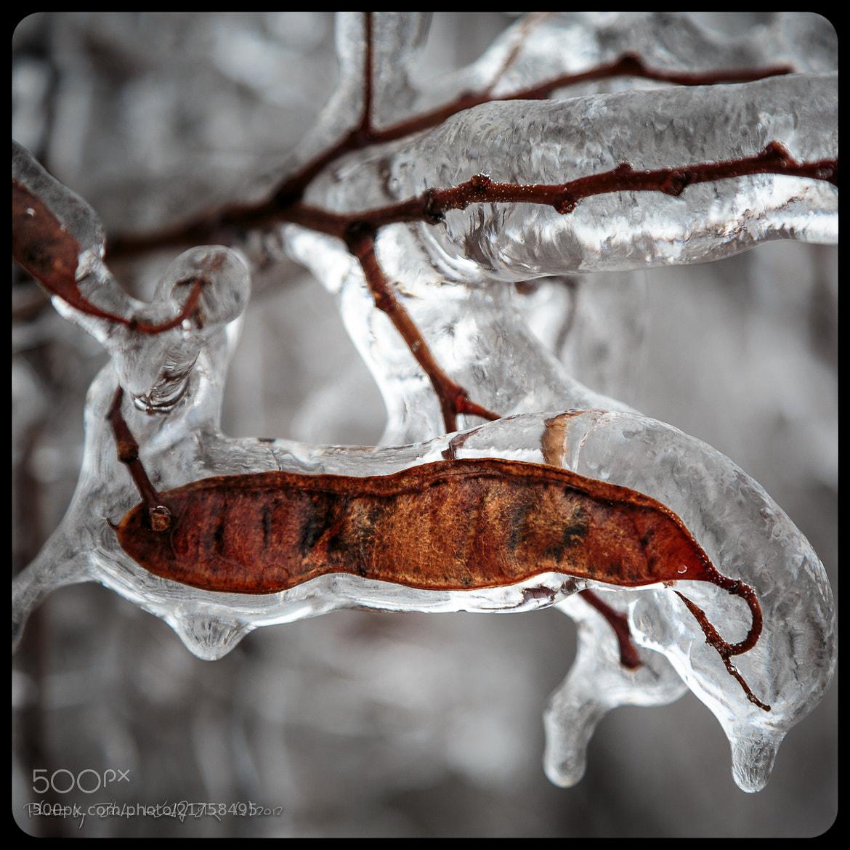 Photograph Ice grip (9) by Zdeno Kajzr on 500px