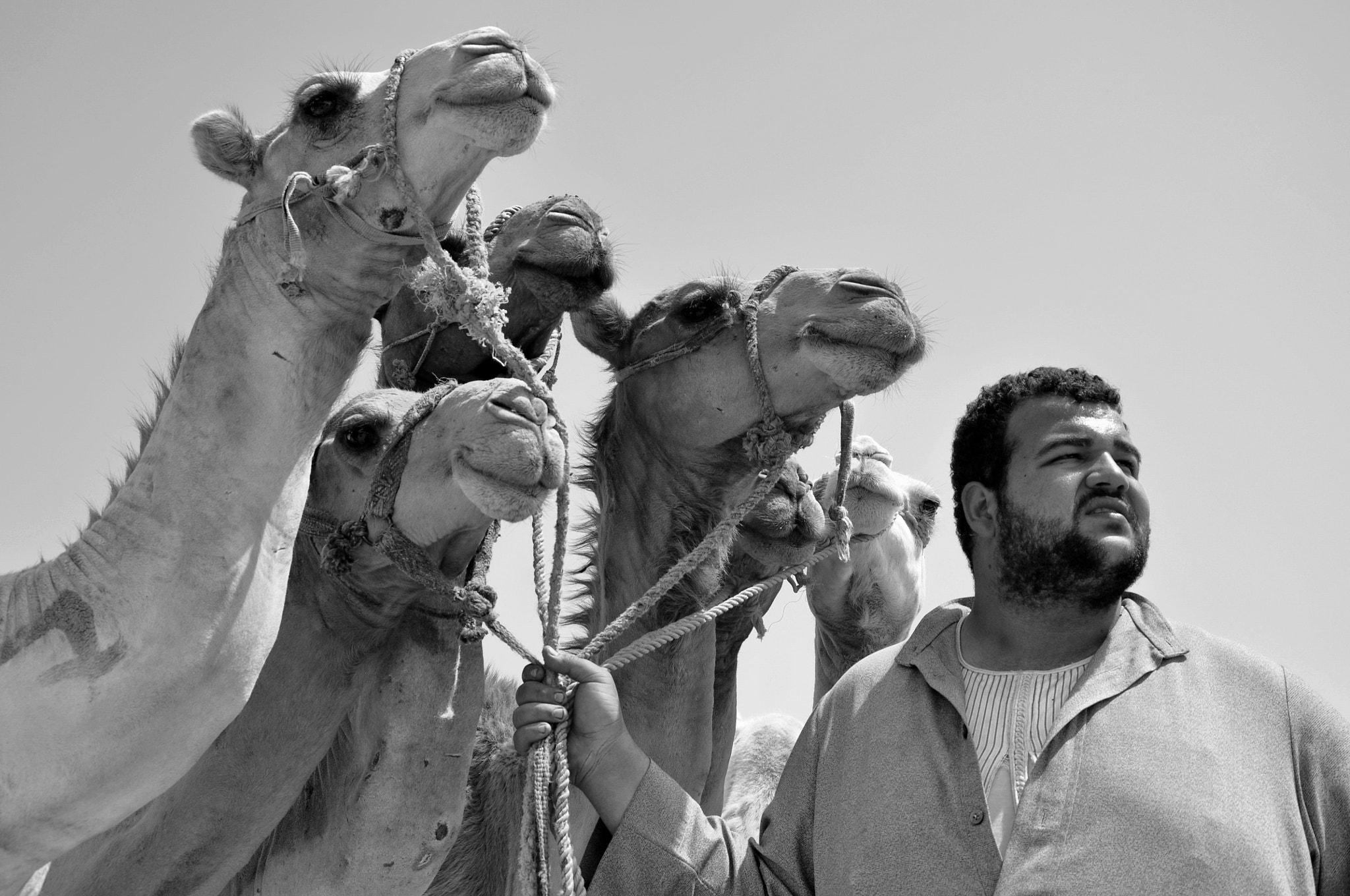 Photograph The Camel Keeper II by Ahmed Yaqub on 500px