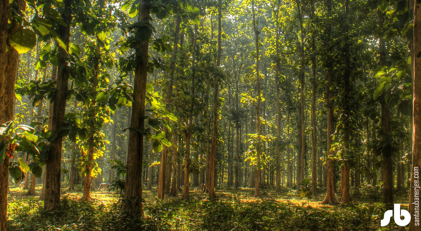 Photograph Forest by Santanu Banerjee on 500px