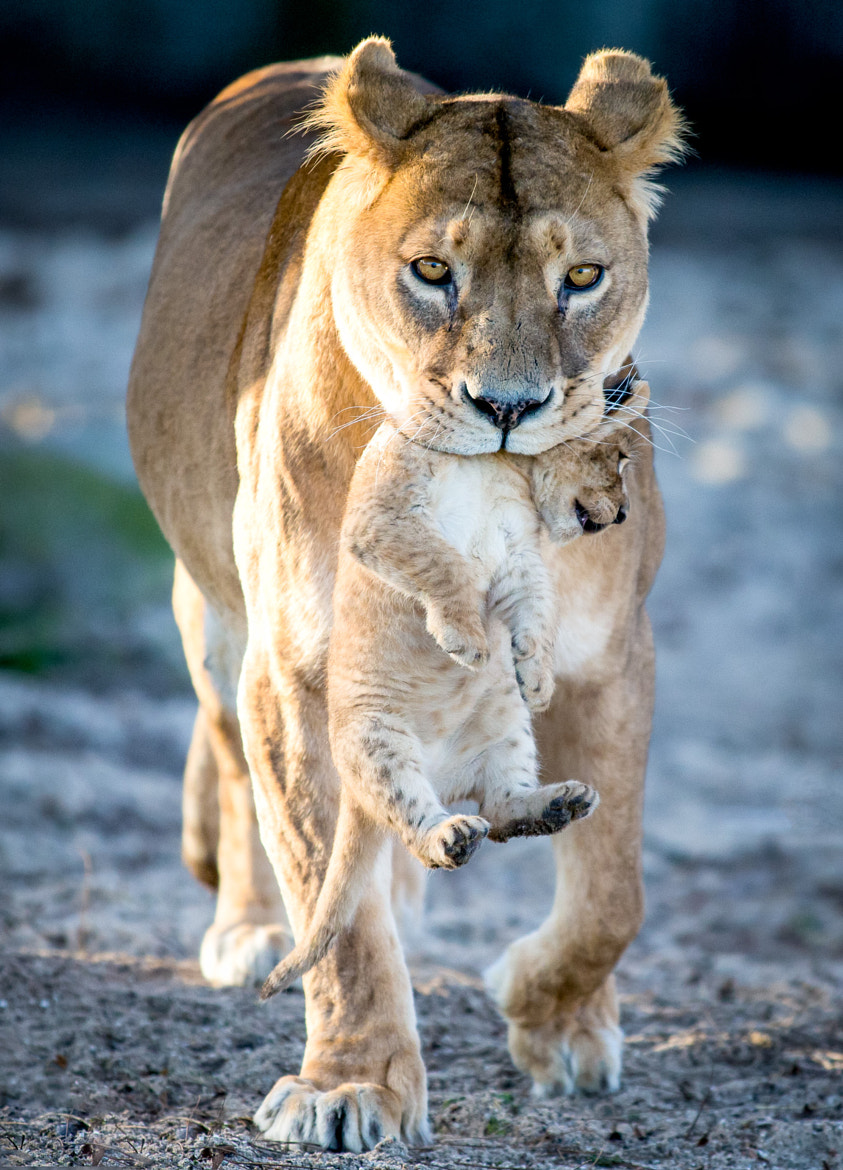 Photograph Proud mom by Frank Rønsholt on 500px