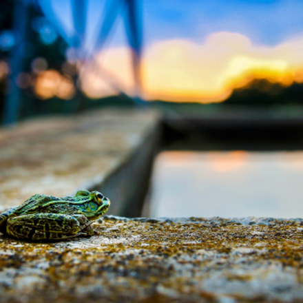 Before the Jump.  A frog about to jump into a farm tank in Texas