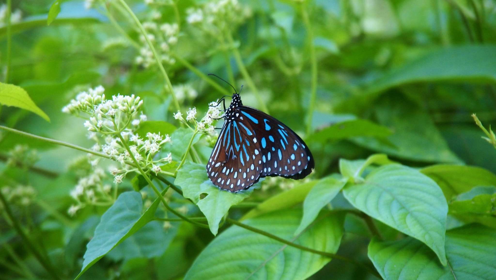 Photograph Black and Blue Butterfly by Christian Bauer on 500px